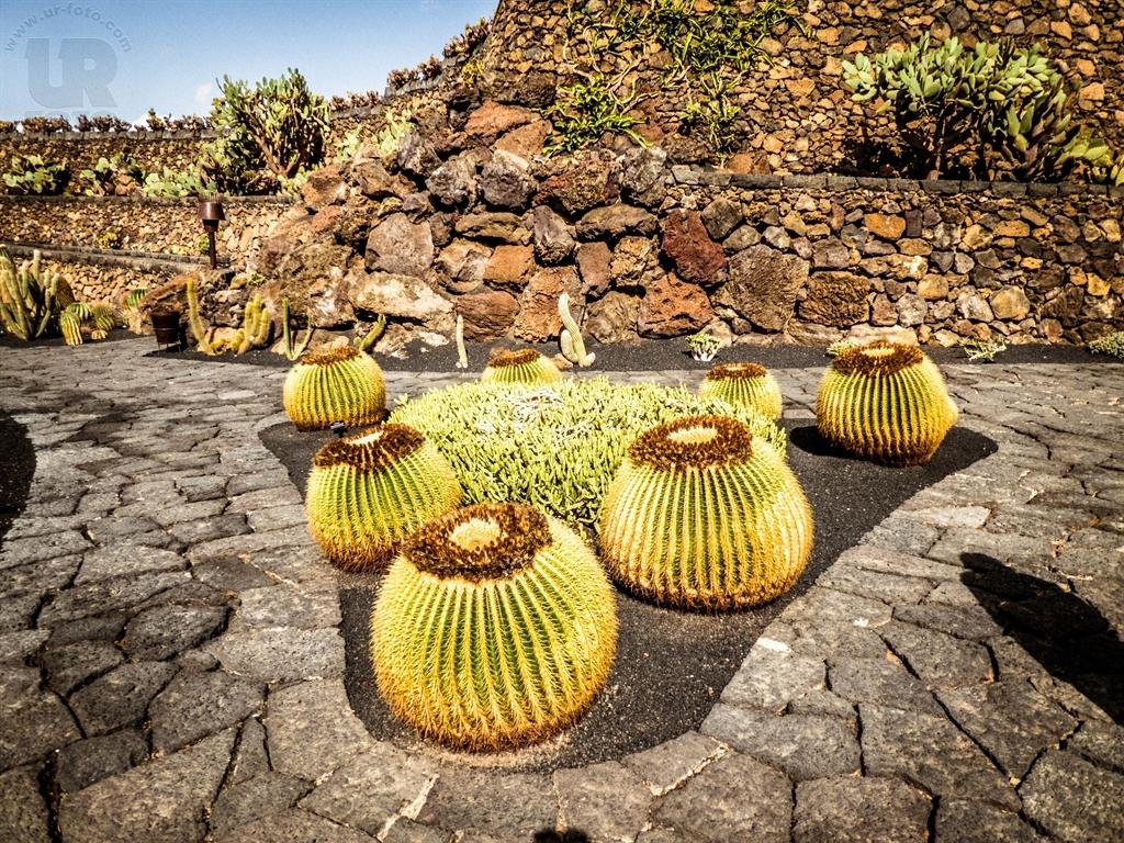 jardin de cactus belichterstatter. Black Bedroom Furniture Sets. Home Design Ideas