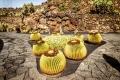 Jardin de Cactus (Lanzarote)