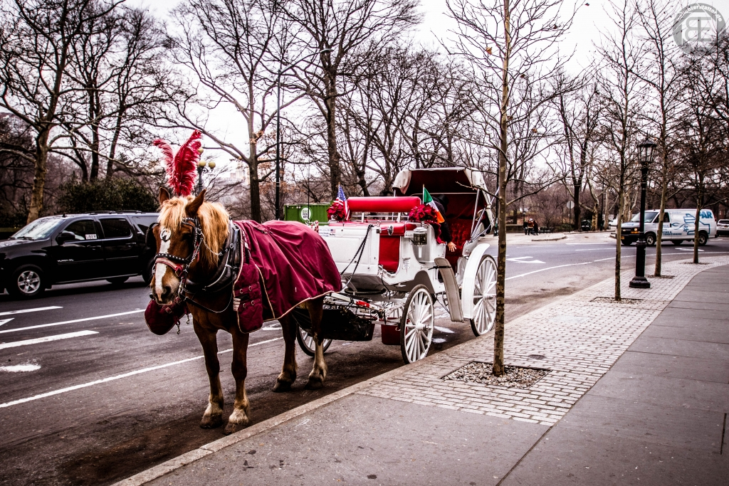 New York City 2019: am Central Park