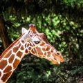 im-Kölner-Zoo