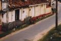 heilige Kühe auf Sri Lanka